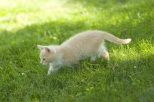 Free Yellow Kitten Playing In The Grass Stock Photo - 4781140