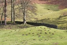 Molehills And Trees Royalty Free Stock Image