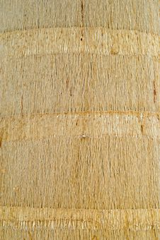 Royal Palm Wooden Texture Royalty Free Stock Image