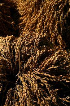Free Harvest Bundle Stock Photos - 4782093