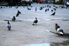 Free Pigeons Sitting Quietly Waiting For The Sundown Stock Photos - 4783763