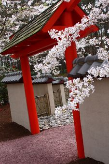 Free Cherry Blossoms Over A Pagoda Royalty Free Stock Photography - 4783857