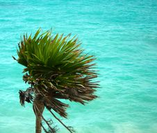 Free Palm And Ocean Stock Photos - 4784233