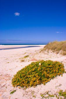 Free Beach I Royalty Free Stock Image - 4784256