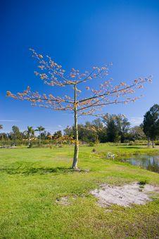 Free Thorny Tree Royalty Free Stock Photography - 4784307