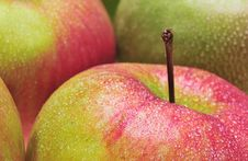 Free Apples Royalty Free Stock Photography - 4788057
