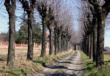 Free Line Of Trees Stock Photo - 4788510