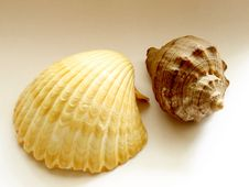 Free Shells Stock Images - 4789564