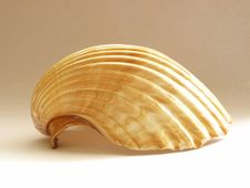 Free Shell Stock Images - 4789574