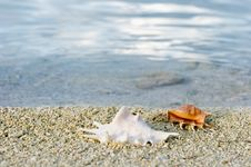 Free Two Cockleshells Stock Photo - 4790020