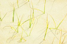 Free Small Grass In Sand Beach Royalty Free Stock Image - 4790146