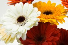 Free Colorful Gerberas Stock Photo - 4790310