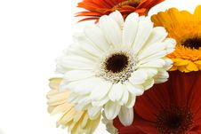 Free Colorful Gerberas Stock Photo - 4790320