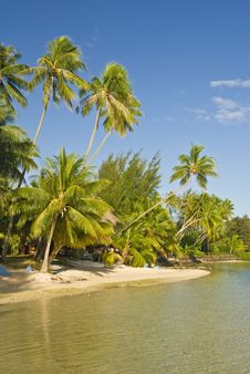 Free Tropical Beach Resort On Moorea In South Seas Royalty Free Stock Photography - 4790397