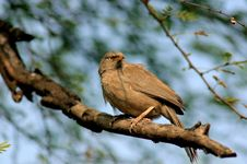 India: Bird In Rajasthan Stock Images
