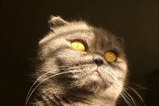 Free Shy Cat Royalty Free Stock Photo - 4791945