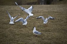 Free Seaguls Stock Image - 4793161