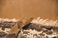 Free Snake Shot In Terrarium Royalty Free Stock Photos - 4794748