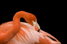 Free Closeup Of A Flamingo Stock Photos - 4794883