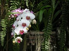 Free Orchid Garden Royalty Free Stock Image - 4795926