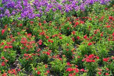 Free Land Of Flowers Sea Royalty Free Stock Photography - 4796277