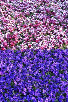Free Land Of Flowers Balance Stock Photo - 4796360