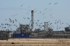 Free Geese At St Fergus Gas Terminal/Refinery Royalty Free Stock Image - 4797006