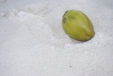 Free Coconut Fruit On The Beach Sand Stock Images - 4797354