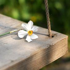 Free Spring Flower Swinging Stock Photos - 4797583