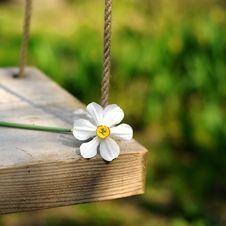 Free Spring Flower Swinging Stock Image - 4797601