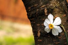 Free Spring Flower Royalty Free Stock Photos - 4797688