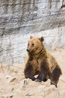 Free Bear Stock Image - 4798121
