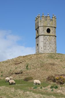 Free Tower And Sheep Royalty Free Stock Photography - 4798407