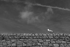 Free Seawall And Seagull Royalty Free Stock Photography - 4798507