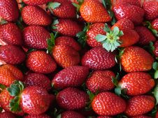 Free Strawberries Stock Photography - 4798622