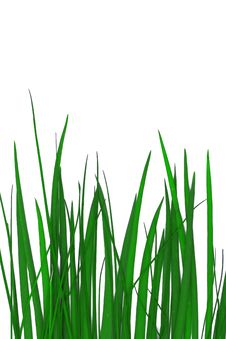 Free Grass Background Stock Photos - 4799353