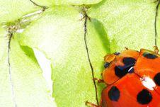 Free Cute Ladybug Stock Image - 4799651