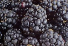 Free Blackberries Background. Stock Photography - 4799752