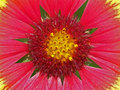 Free Red Flower. Royalty Free Stock Photos - 480948