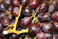 Free Juicy Red Grapes Royalty Free Stock Image - 482676