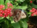 Free Just A Butterfly Royalty Free Stock Photos - 484598