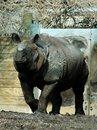 Free Male Rhinocerus Stock Photo - 489610