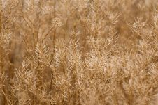 Free Grasses Royalty Free Stock Photography - 481417