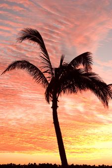 Free Palm On The Coast Stock Images - 481494