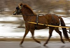 Free Chestnut Pulling - Motion Blur Stock Photography - 485712