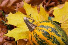 Tail Of A Yellow Pumpkin Royalty Free Stock Photos