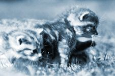 Free Kittens In Grass Blue Stock Images - 488074