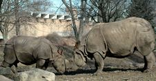 Mother And Baby Rhinoceros Stock Images
