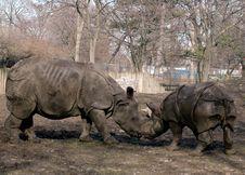 Free Female And Baby Rhinoceros Stock Image - 489651