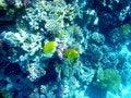 Free Red Sea 3 Stock Photo - 4807790